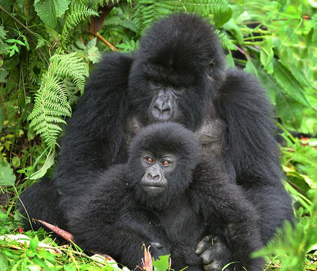 primaten01