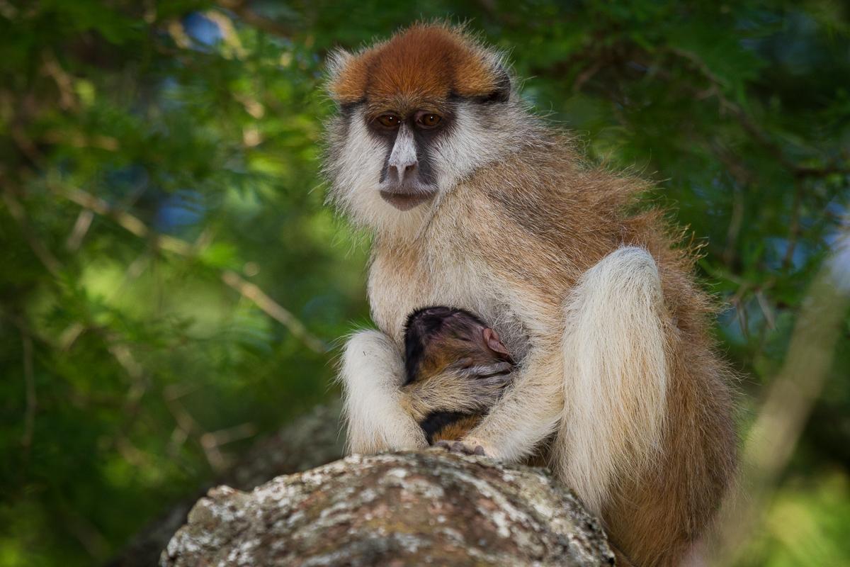 primaten03