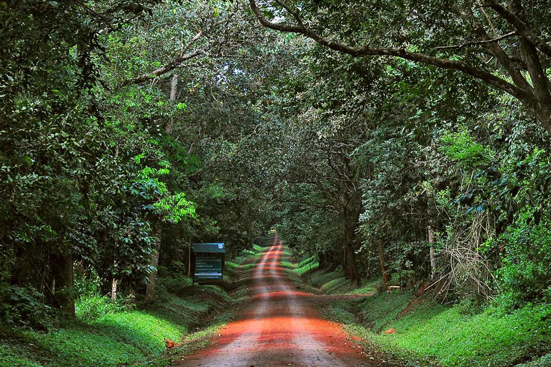 budongo-forest2